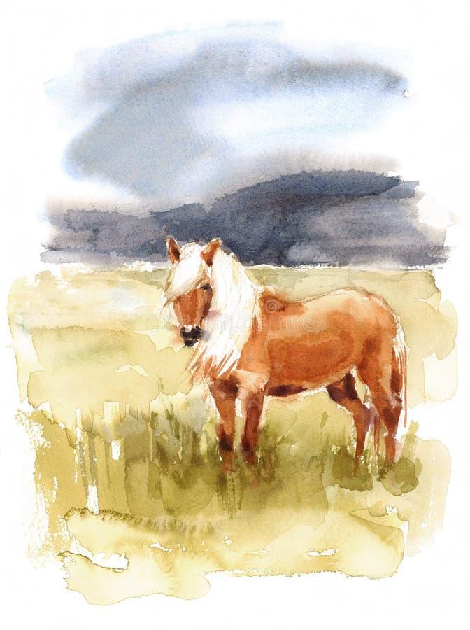 Montañas animales de la naturaleza del ejemplo de la acuarela islandesa del caballo pintadas a mano ilustración del vector