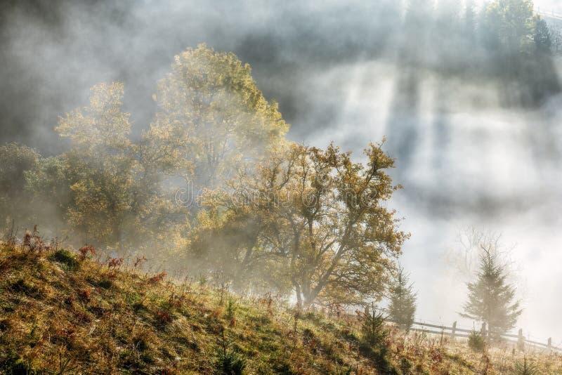 Montañas cárpatas La mañana en las montañas, rayos hace su manera a través de los árboles de la iluminación de la niebla imágenes de archivo libres de regalías