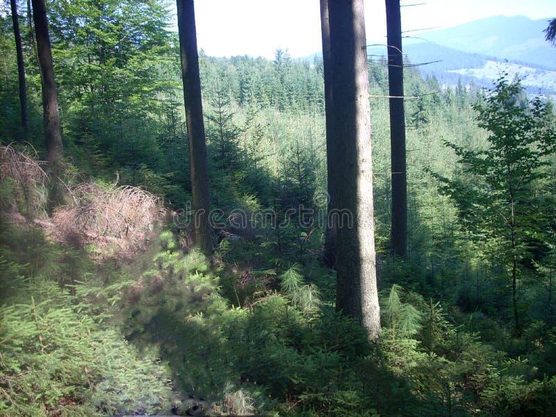 Montañas, Cárpatos, Ucrania, bosque, verde, árboles, aire fresco imagen de archivo libre de regalías