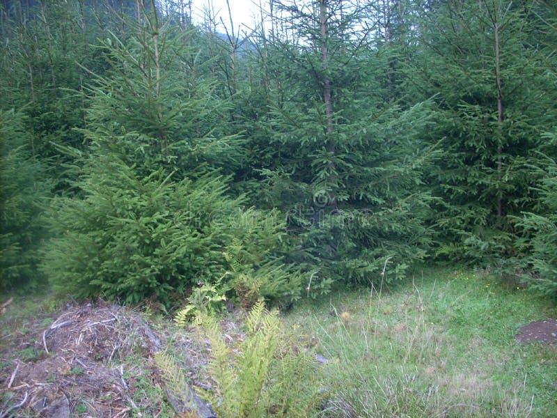 Montañas, Cárpatos, Ucrania, bosque, verde, árboles, aire fresco fotos de archivo libres de regalías