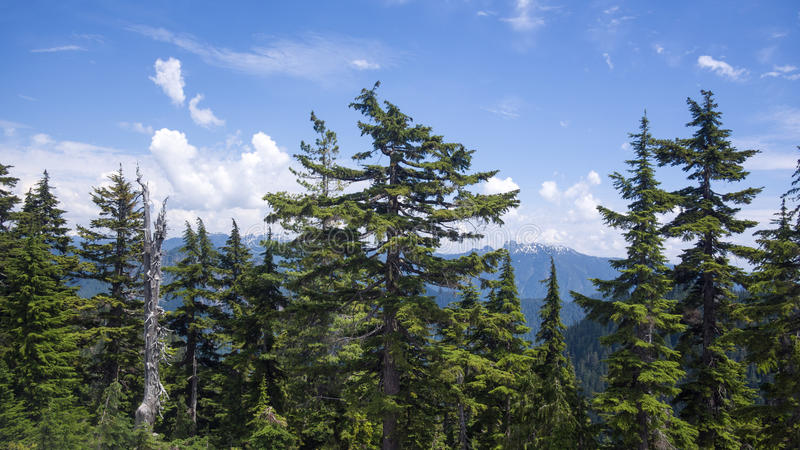 Montañas costeras cerca de Vancouver foto de archivo