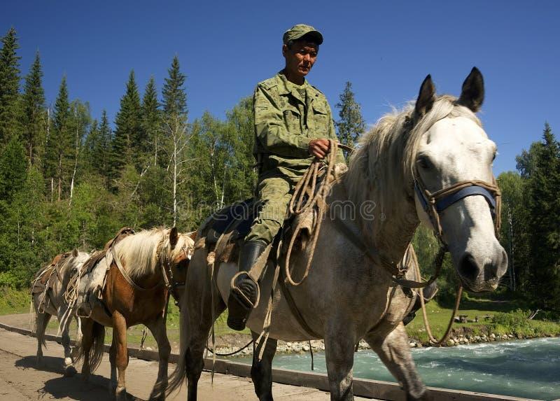 MONTAÑAS DE ALTAI, RUSIA - 14 DE JULIO DE 2016: Gente local que usa los caballos para el transporte en la montaña de Belukha imágenes de archivo libres de regalías