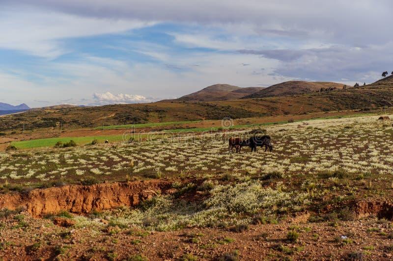 Montañas de Bolivia, altiplano fotos de archivo