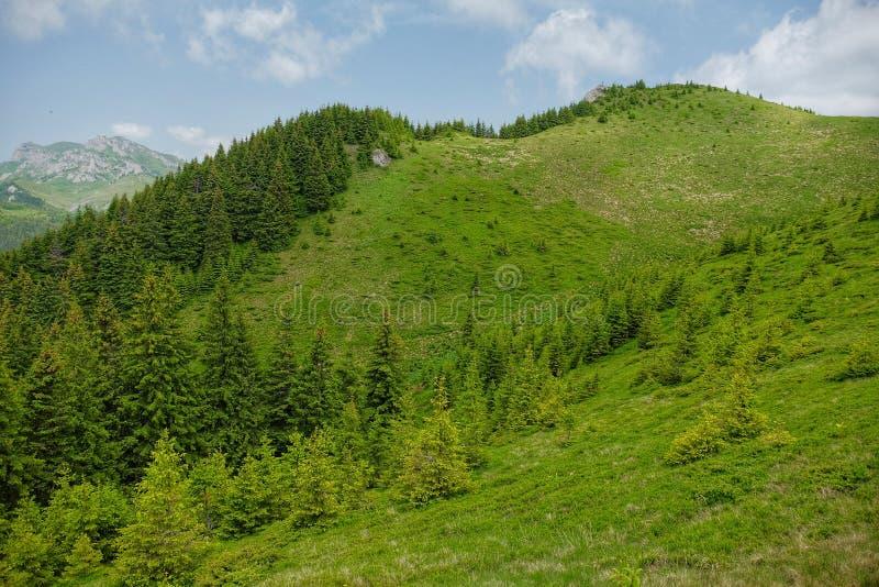 Montañas de Ciucas en Rumania foto de archivo