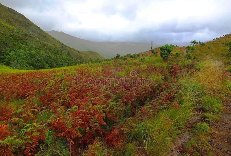 Montañas de Nyanga foto de archivo libre de regalías