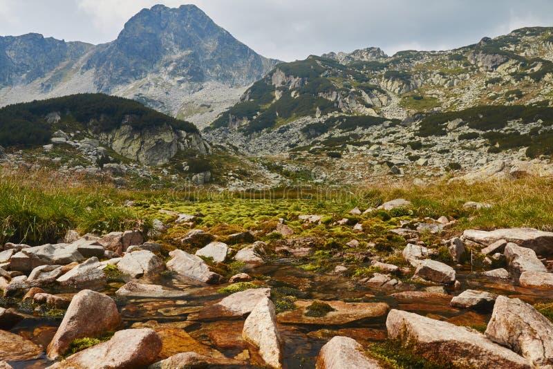 Montañas de Retezat, Rumania durante verano, humedal en el primero plano fotografía de archivo libre de regalías