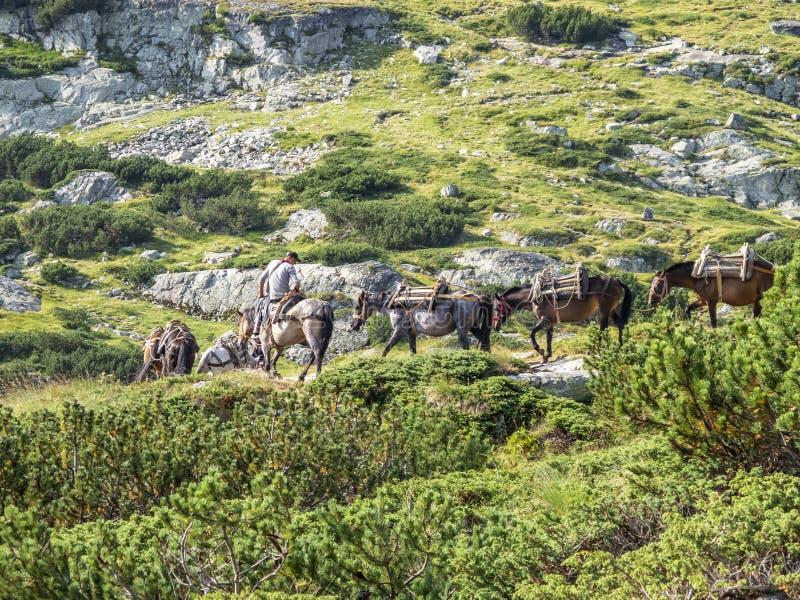 MONTAÑAS DE RILA, BULGARIA - 9 DE AGOSTO DE 2012: Un hombre joven en un caballo lleva un convoy del caballo para un equipaje de l imagen de archivo libre de regalías