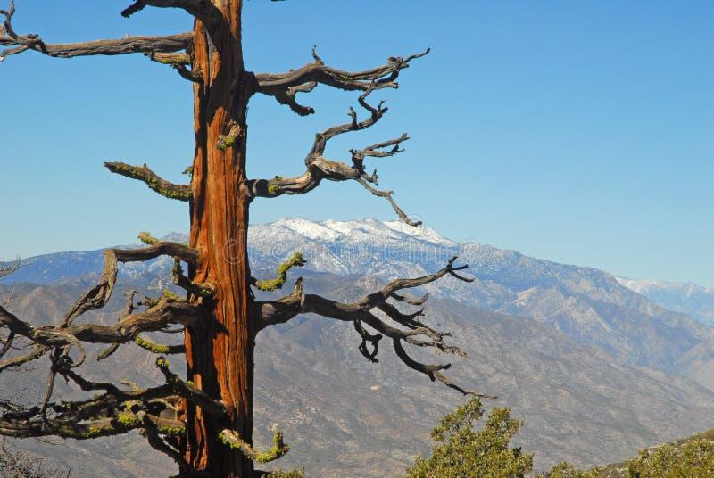 Montañas de San Jacinto imagenes de archivo