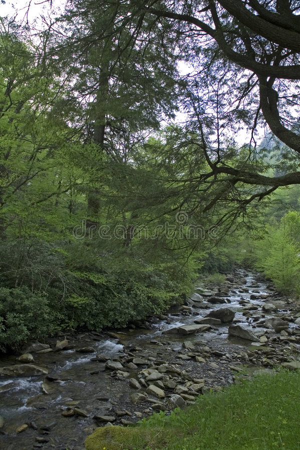 Montañas de Smokey, camino de la sima en resorte foto de archivo