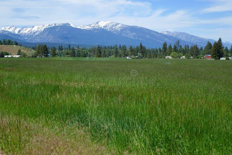 Montañas del Bitterroot - Montana imágenes de archivo libres de regalías