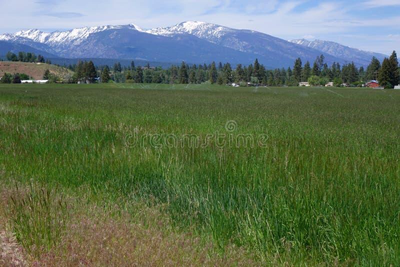 Montañas del Bitterroot - Montana fotografía de archivo libre de regalías