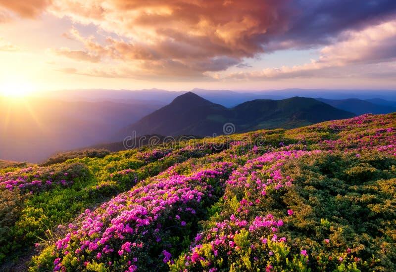 Montañas durante el flor y la salida del sol de las flores imagenes de archivo