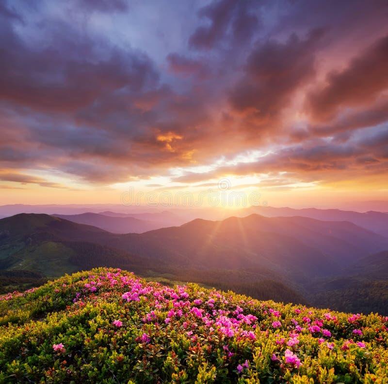 Montañas durante el flor y la salida del sol de las flores Flores en las colinas de la montaña fotos de archivo libres de regalías