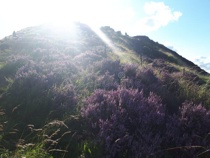 Montañas escocia brezo Luz del sol Dom imágenes de archivo libres de regalías