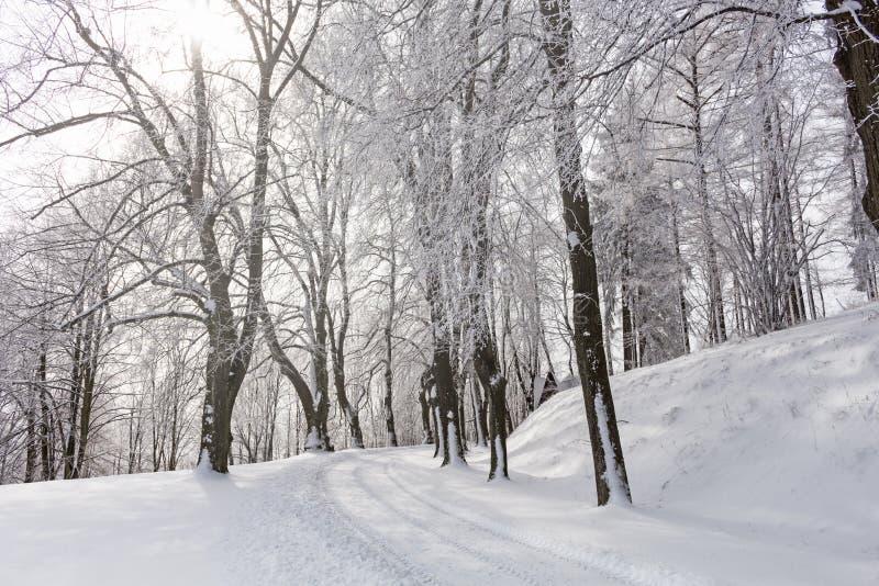 Montañas majestuosas del paisaje misterioso del invierno en invierno Árbol nevado del invierno mágico Camino del invierno en las  imágenes de archivo libres de regalías