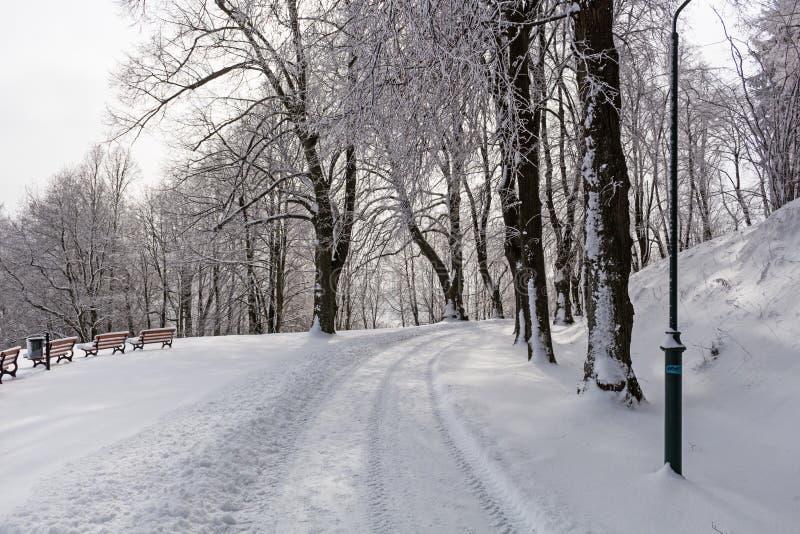 Montañas majestuosas del paisaje misterioso del invierno en invierno Árbol nevado del invierno mágico Camino del invierno en las  imagen de archivo libre de regalías