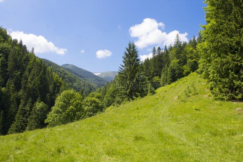 Montañas maravillosas Naturaleza del ucraniano Cárpatos foto de archivo libre de regalías