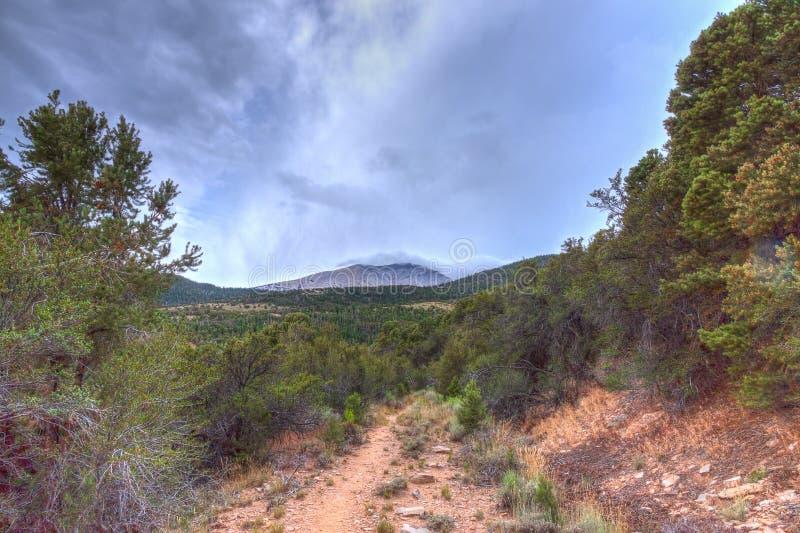 Montañas nacionales área-Mt recreativo nacional de la Bosque-primavera de Nanovoltio-Humboldt-Toiyabe charleston foto de archivo libre de regalías