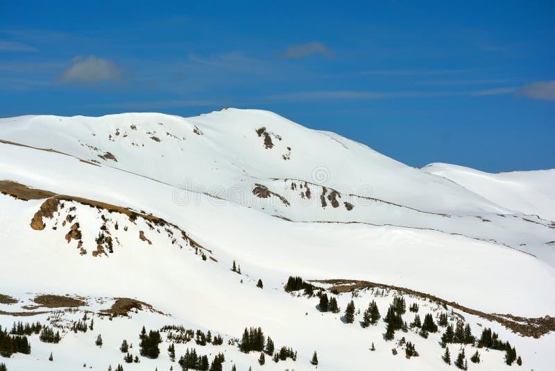 Montañas nevadas con los árboles de pino en un día claro fotografía de archivo