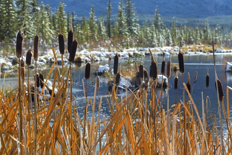 Montañas rocosas canadienses de Marsh Wetland Banff National Park de los lagos bermellones fotos de archivo
