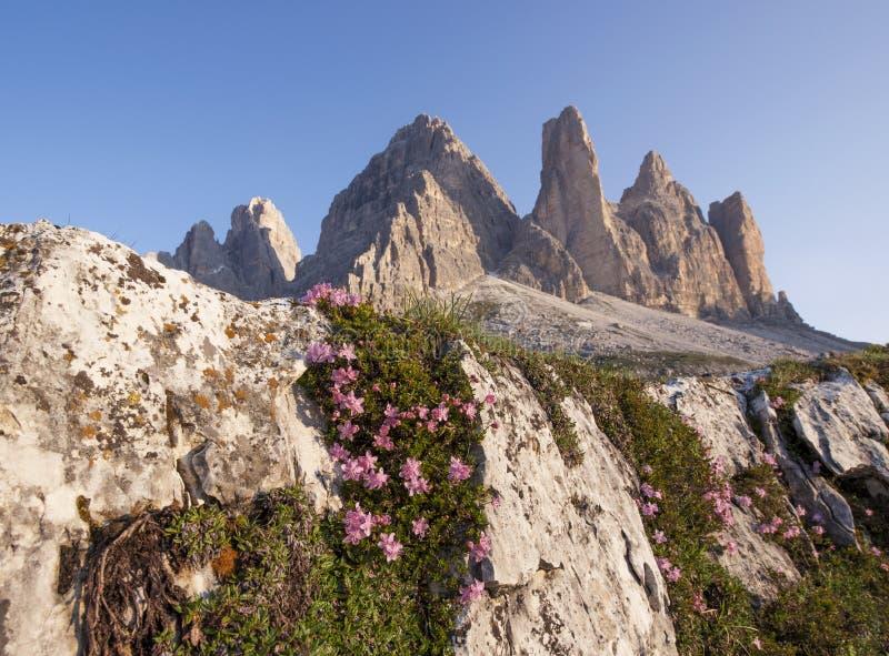 Montañas rocosas con las flores y el musgo en una roca imagen de archivo libre de regalías