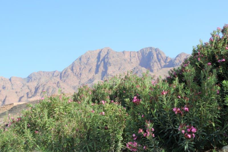montañas rodeadas con las flores imagen de archivo libre de regalías