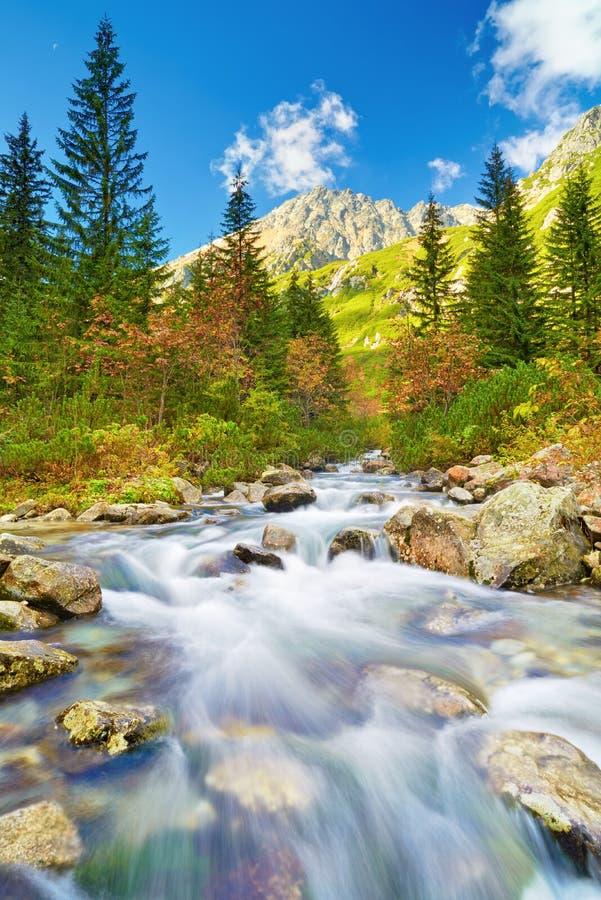 Montañas Tatras Cárpatos de la corriente de Roztoka altas imágenes de archivo libres de regalías