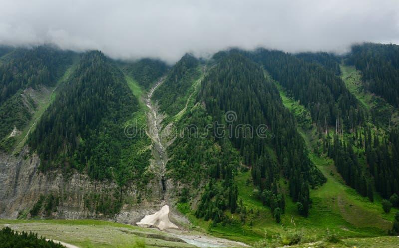 Montañas verdes con el bosque del árbol de pino en Srinagar, la India fotos de archivo