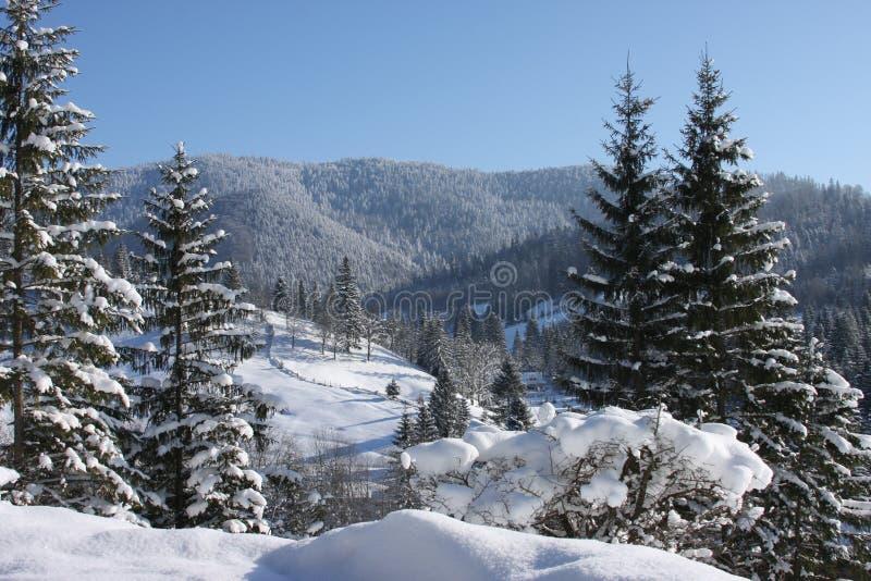 Montañas y árboles cubiertos en nieve foto de archivo