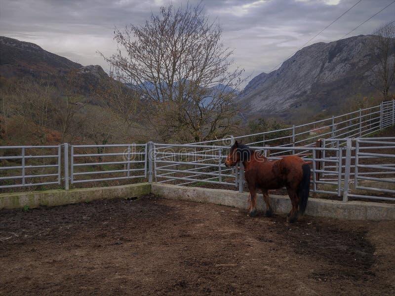 Montañas y caballos en invierno stock image