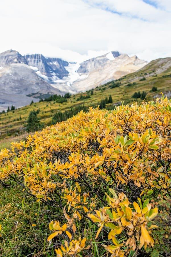 Montañas y glaciar de desatención del campo en la caída foto de archivo
