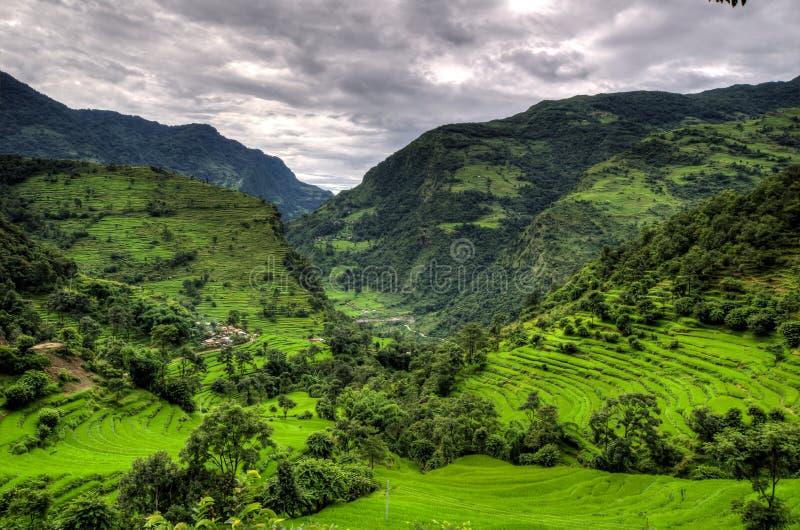 Montañas y plantaciones del arroz en el Annapurna fotos de archivo