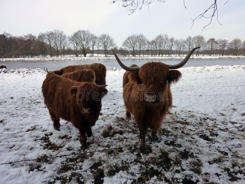 Montañeses escoceses en paisaje del invierno imagenes de archivo