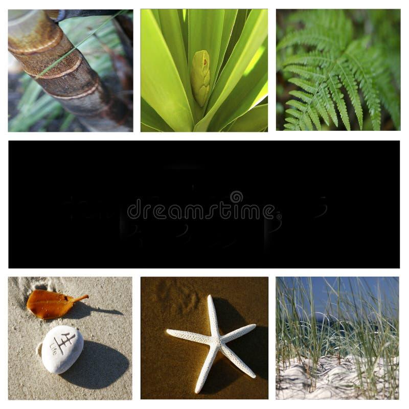 montaż natury fotografia royalty free