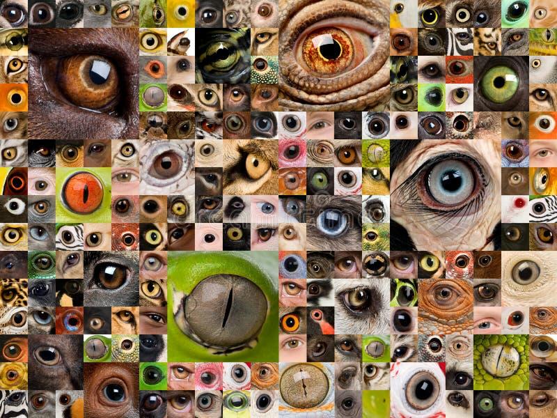 Montage of animal eyes stock photography