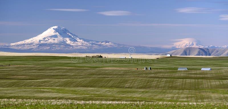 Montagem Adams Mt Rainier Farm Agriculture Oregon Landscape fotografia de stock