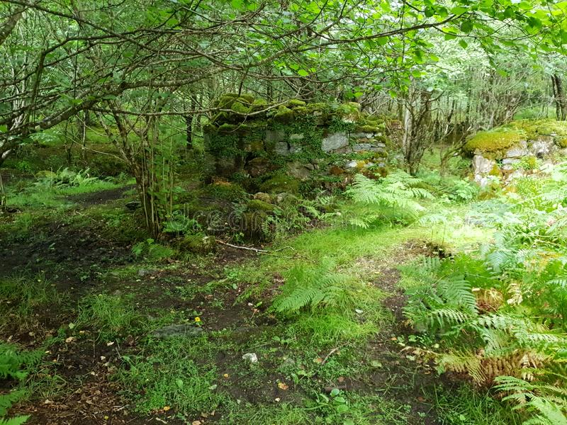 Montagem bulding velha da floresta, natureza fotografia de stock