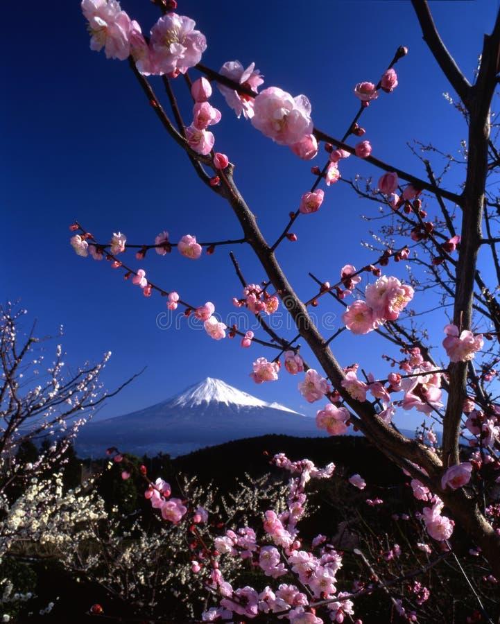 Montagem Fuji VI imagens de stock