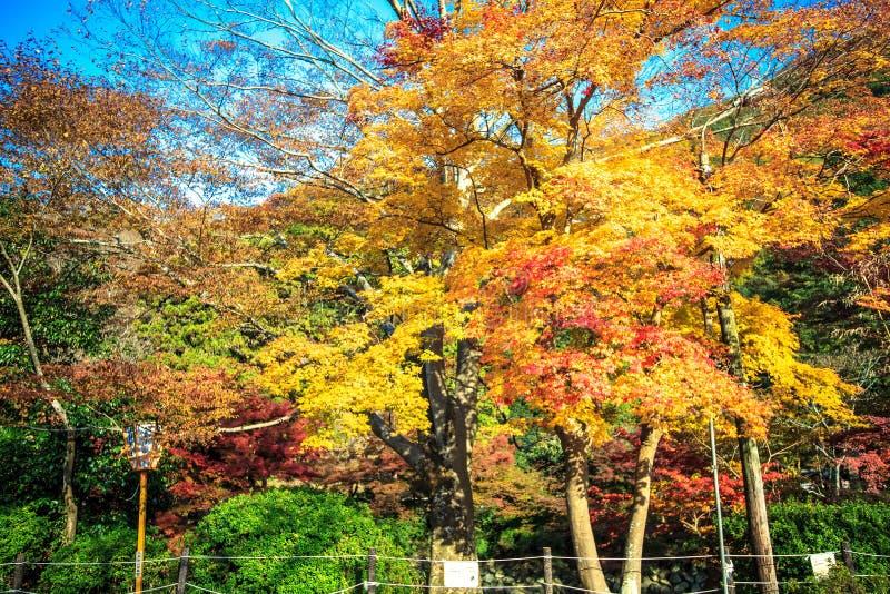 Montagem Hiei fotografia de stock royalty free