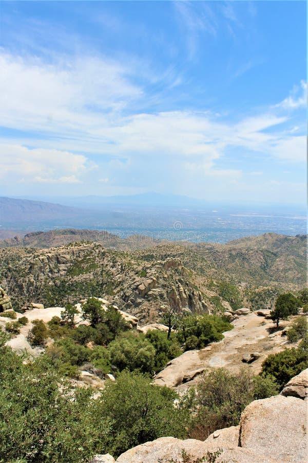 Montagem Lemmon, Santa Catalina Mountains, floresta nacional de Coronado, Tucson, o Arizona, Estados Unidos fotografia de stock royalty free