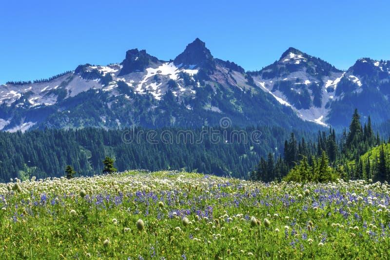 Montagem Rainier National Park W do paraíso da escala de Tatoosh dos Wildflowers foto de stock