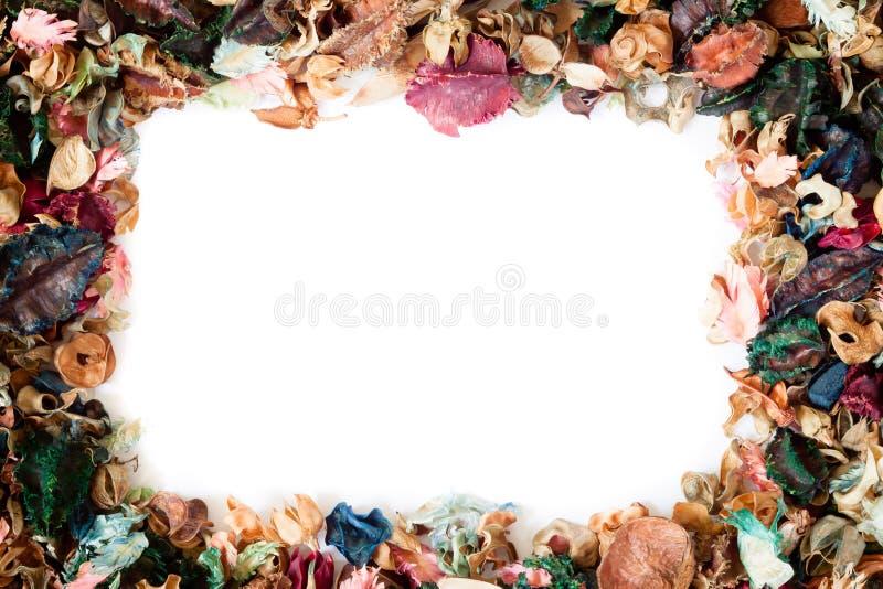 Montages van droge aromatische bloem als vierkant kader over royalty-vrije stock foto
