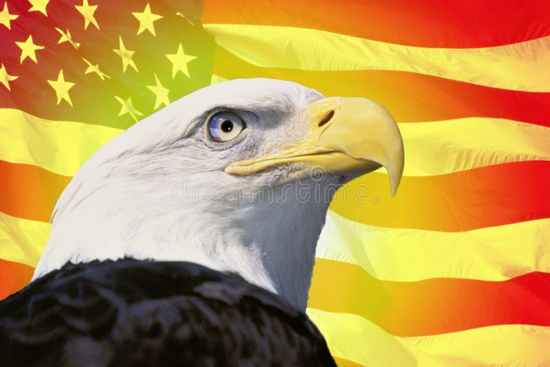 Montaggio della foto: Bandiera americana ed aquila calva immagine stock