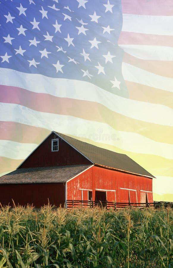 Montaggio della foto: Granaio rosso, campo di grano ed aquila americana fotografia stock