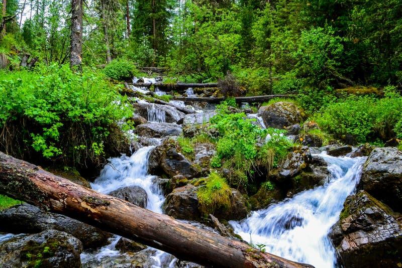 Montagna Altai, cascata fotografie stock