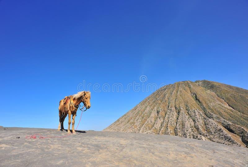 Montagna del cavallo immagini stock