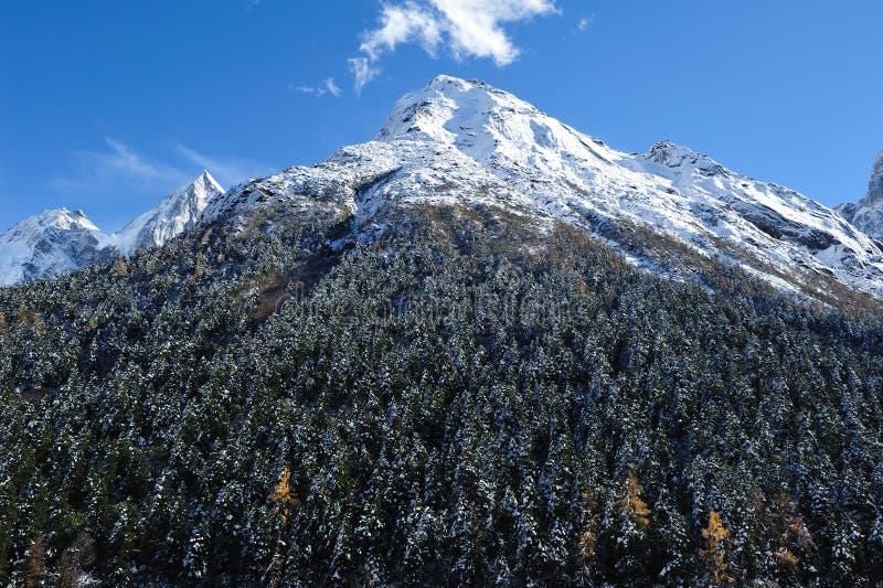 Montagna della neve con gli alberi fotografia stock libera da diritti