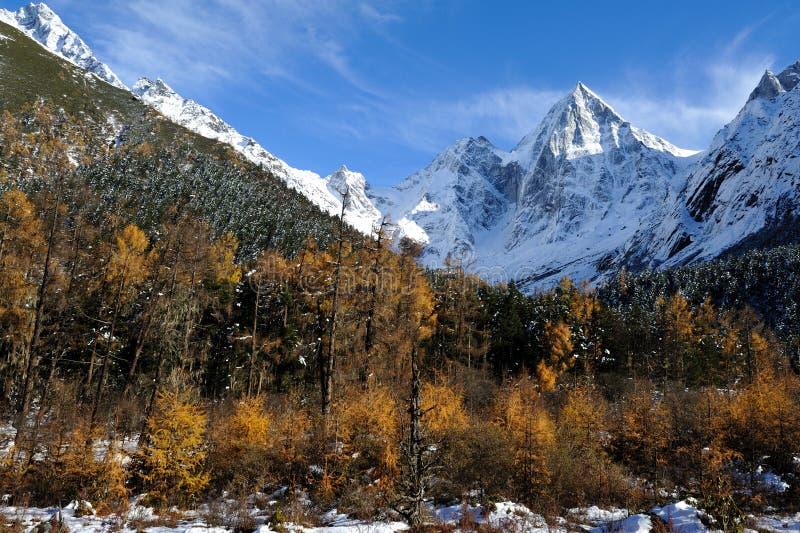 Montagna della neve con il cedro di autunno immagini stock