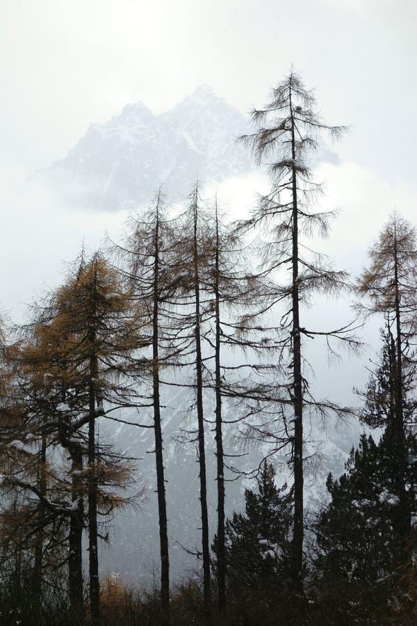 Montagna della neve con il cedro di autunno fotografie stock libere da diritti