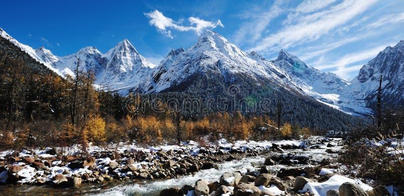Montagna della neve con il cedro di autunno fotografia stock libera da diritti